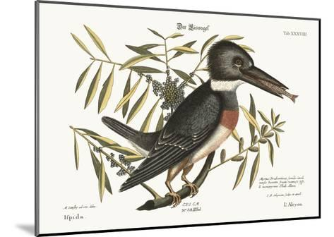 The Kingfisher, 1749-73-Mark Catesby-Mounted Giclee Print