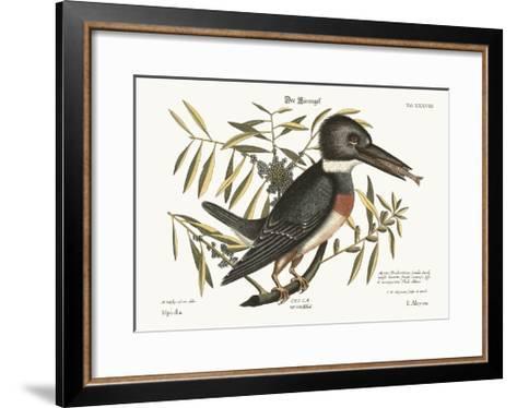 The Kingfisher, 1749-73-Mark Catesby-Framed Art Print