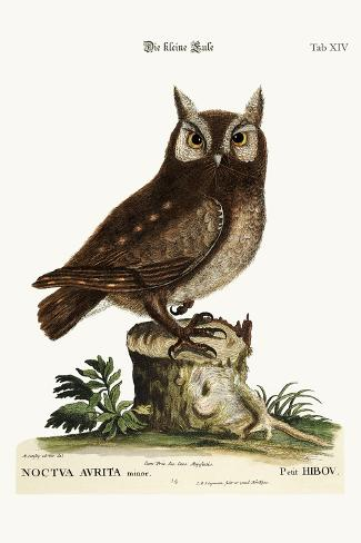 The Little Owl, 1749-73-Mark Catesby-Stretched Canvas Print