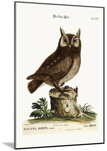 The Little Owl, 1749-73-Mark Catesby-Mounted Giclee Print