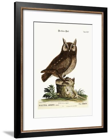 The Little Owl, 1749-73-Mark Catesby-Framed Art Print