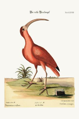 The Red Curlew, 1749-73-Mark Catesby-Stretched Canvas Print