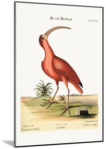 The Red Curlew, 1749-73-Mark Catesby-Mounted Giclee Print