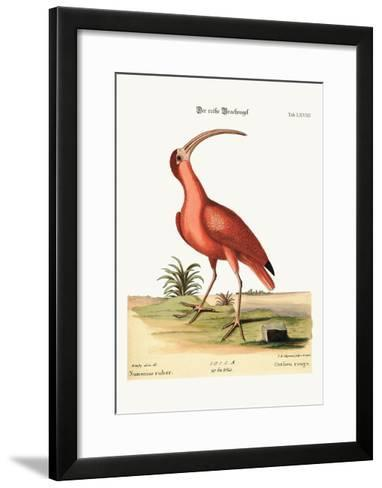 The Red Curlew, 1749-73-Mark Catesby-Framed Art Print