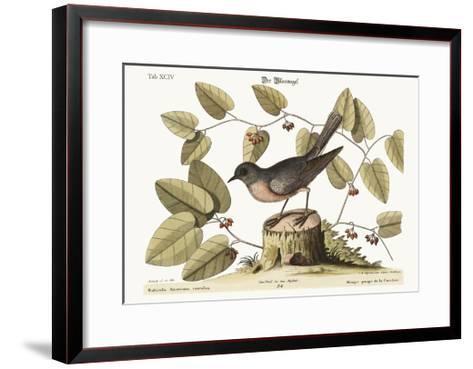 The Blue Bird, 1749-73-Mark Catesby-Framed Art Print