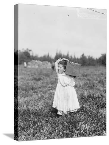 Eight Year Old Jennie Camillo from Philadelphia Picking Cranberries at Theodore Budd's Bog-Lewis Wickes Hine-Stretched Canvas Print