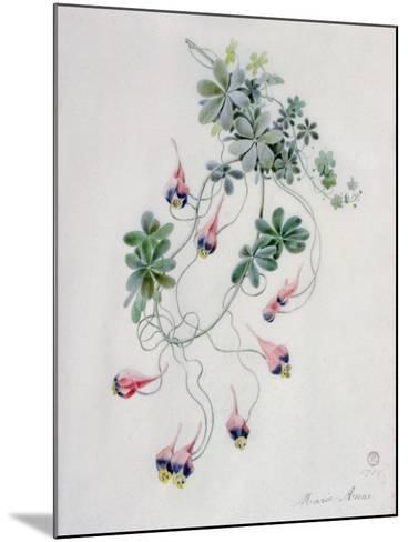 Flower Pieces- Marie-Anne-Mounted Giclee Print