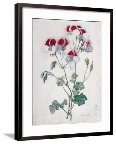 Crane's Bill- Marie-Anne-Framed Art Print