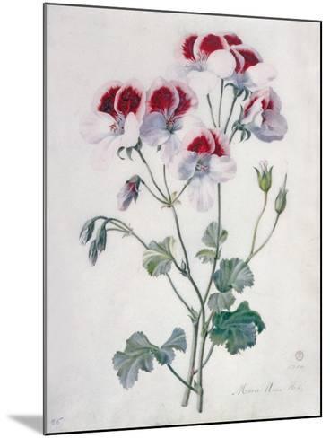 Crane's Bill- Marie-Anne-Mounted Giclee Print
