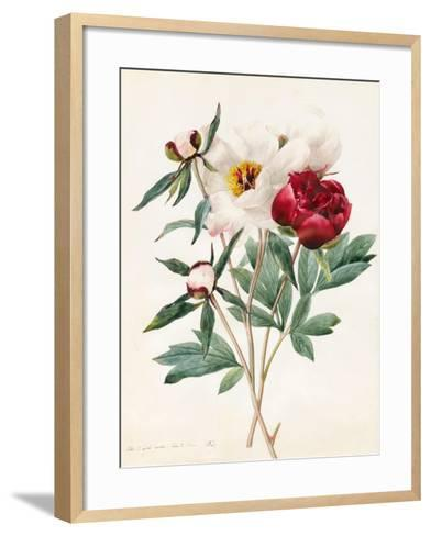 Red and White Herbaceous Paeonies, 1829 (W/C with Some Bodycolour on Vellum)-Louise D'Orleans-Framed Art Print