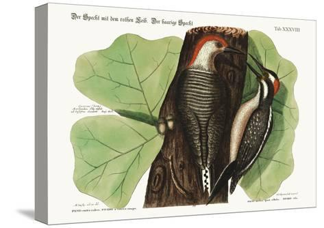 The Red-Bellied Woodpecker. the Hairy Woodpecker., 1749-73-Mark Catesby-Stretched Canvas Print