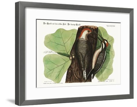 The Red-Bellied Woodpecker. the Hairy Woodpecker., 1749-73-Mark Catesby-Framed Art Print