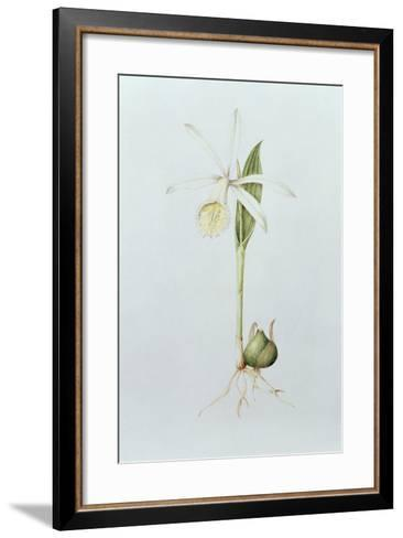 Pleione Formosana Alba-Mary Kenyon-Slaney-Framed Art Print