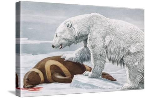 Ribbon Seal, Victim to a Polar Bear-Louis Agassiz Fuertes-Stretched Canvas Print