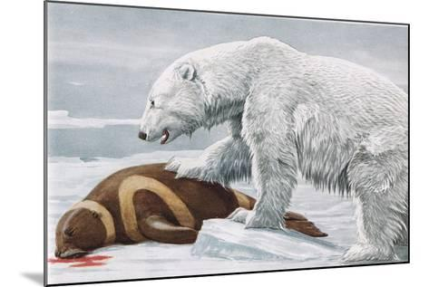 Ribbon Seal, Victim to a Polar Bear-Louis Agassiz Fuertes-Mounted Giclee Print