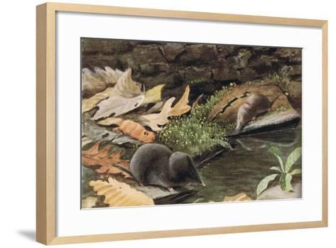 Short Tailed Shrew and Common Shrew-Louis Agassiz Fuertes-Framed Art Print