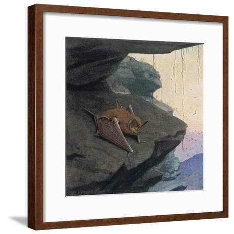 Free Tailed Bat-Louis Agassiz Fuertes-Framed Art Print