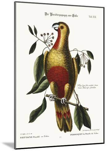 The Parrot of Paradise of Cuba, 1749-73-Mark Catesby-Mounted Giclee Print