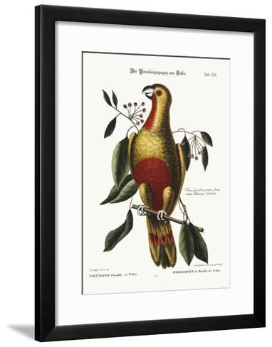 The Parrot of Paradise of Cuba, 1749-73-Mark Catesby-Framed Art Print