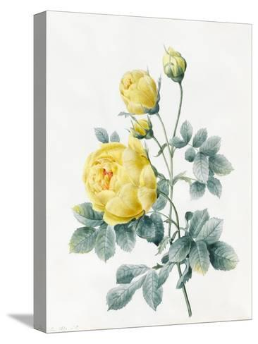 Yellow Roses, 1827-Louise D'Orleans-Stretched Canvas Print
