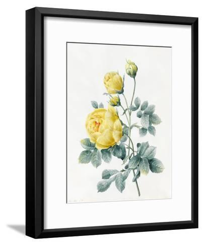 Yellow Roses, 1827-Louise D'Orleans-Framed Art Print