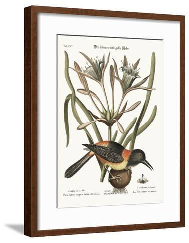 The Yellow and Black Pye, 1749-73-Mark Catesby-Framed Art Print