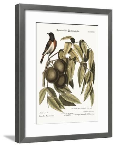 The Redstart, 1749-73-Mark Catesby-Framed Art Print