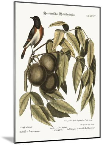 The Redstart, 1749-73-Mark Catesby-Mounted Giclee Print