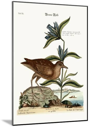 The Soree, 1749-73-Mark Catesby-Mounted Giclee Print