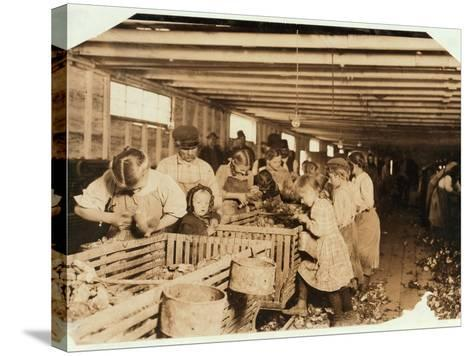 Rosy Aged 8 Works a 14 Hour Day as an Oyster Shucker at Dunbar Cannery, Louisiana, 1911-Lewis Wickes Hine-Stretched Canvas Print