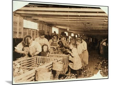 Rosy Aged 8 Works a 14 Hour Day as an Oyster Shucker at Dunbar Cannery, Louisiana, 1911-Lewis Wickes Hine-Mounted Photographic Print