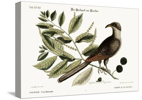 The Cuckow of Carolina, 1749-73-Mark Catesby-Stretched Canvas Print