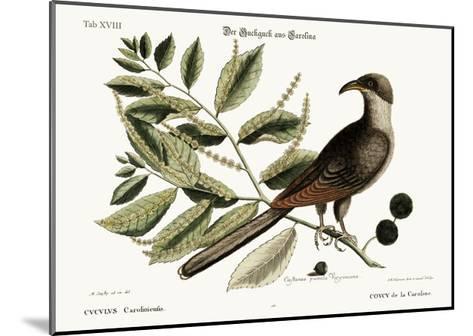The Cuckow of Carolina, 1749-73-Mark Catesby-Mounted Giclee Print