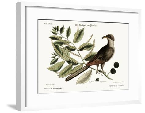 The Cuckow of Carolina, 1749-73-Mark Catesby-Framed Art Print