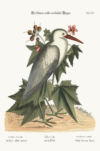 The Little White Heron, 1749-73-Mark Catesby-Stretched Canvas Print