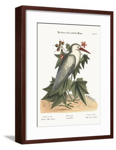 The Little White Heron, 1749-73-Mark Catesby-Framed Art Print