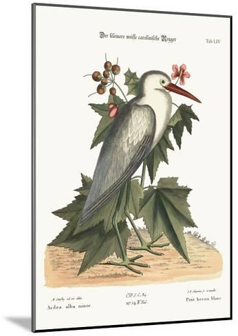 The Little White Heron, 1749-73-Mark Catesby-Mounted Giclee Print