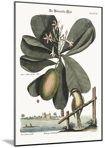 The Bahama Titmouse, 1749-73-Mark Catesby-Mounted Giclee Print