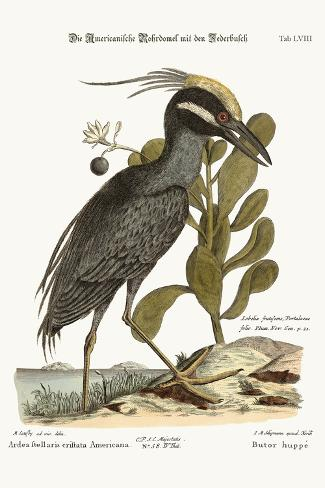 The Crested Bittern, 1749-73-Mark Catesby-Stretched Canvas Print