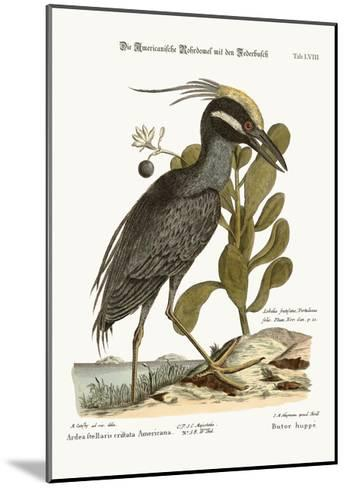 The Crested Bittern, 1749-73-Mark Catesby-Mounted Giclee Print