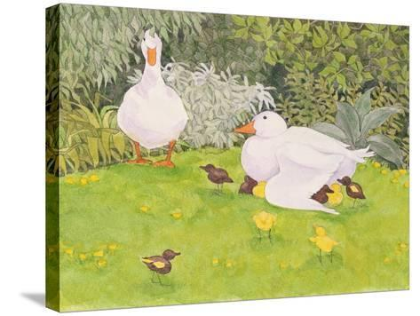 Ducks and Ducklings-Linda Benton-Stretched Canvas Print