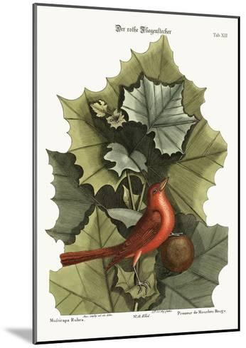 The Summer Red-Bird, 1749-73-Mark Catesby-Mounted Giclee Print