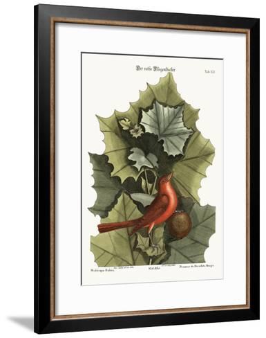 The Summer Red-Bird, 1749-73-Mark Catesby-Framed Art Print
