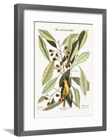 The Yellow Titmouse, 1749-73-Mark Catesby-Framed Art Print