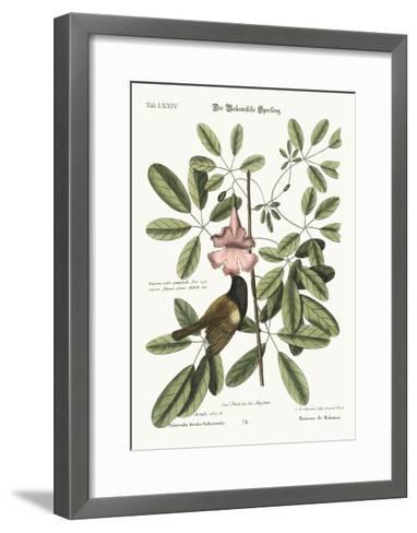 The Bahama Sparrow, 1749-73-Mark Catesby-Framed Art Print