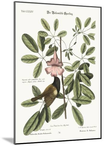 The Bahama Sparrow, 1749-73-Mark Catesby-Mounted Giclee Print