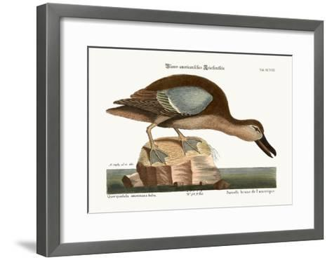 The Blue-Wing Teal, 1749-73-Mark Catesby-Framed Art Print