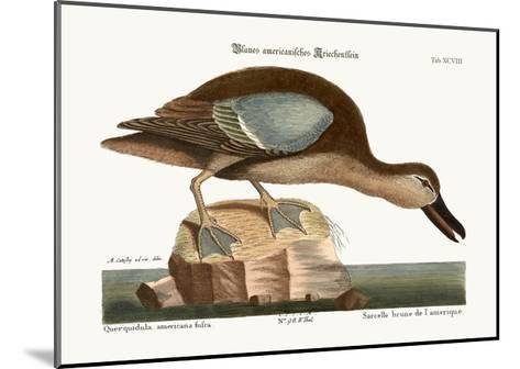 The Blue-Wing Teal, 1749-73-Mark Catesby-Mounted Giclee Print