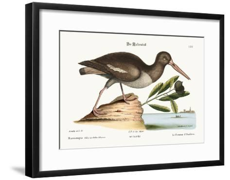 The Oyster Catcher, 1749-73-Mark Catesby-Framed Art Print