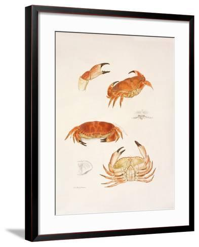 Crabs, 1986-Mary Clare Critchley-Salmonson-Framed Art Print